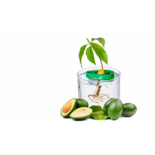 Avocado planter - Premiumgids